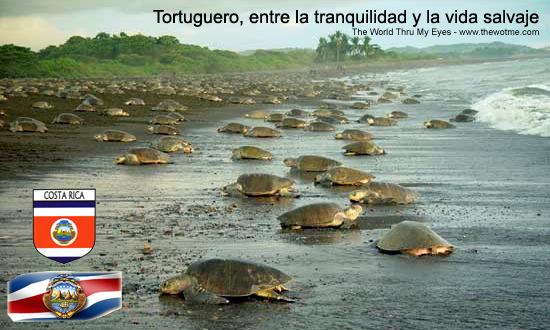 Tortuguero - tortuguero - Tortuguero, entre la tranquilidad y la vida salvaje