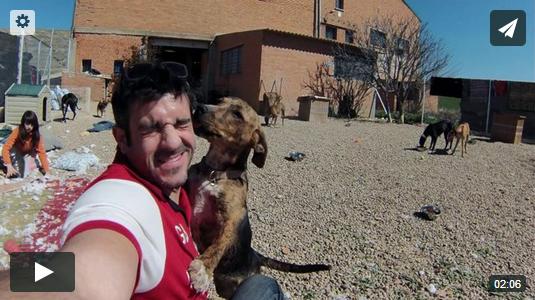 Colaboración con la protectora de animales AXLA Madrid (axlamadrid.org) thewotme@TV - vasa - thewotme@TV