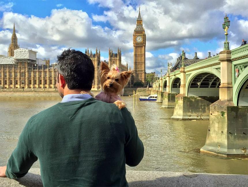 mascotas - portada viajar con perros - Cómo viajar con perros y mascotas
