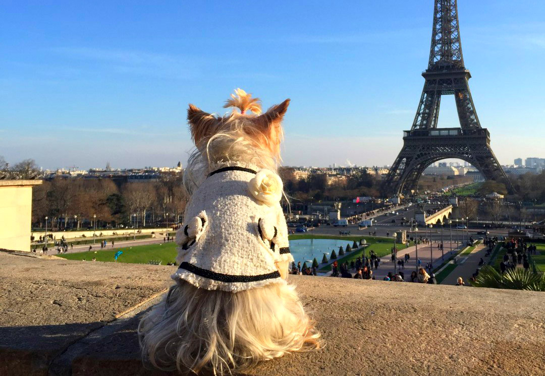 viajar a paris con perro - viajar a paris con perro hotel de nell lujo mascotas francia - Viajar a Paris con perro