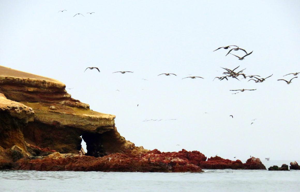 Qué ver en Paracas, Perú qué ver en paracas - IMG 0217 1160x744 - Qué ver en Paracas, Perú