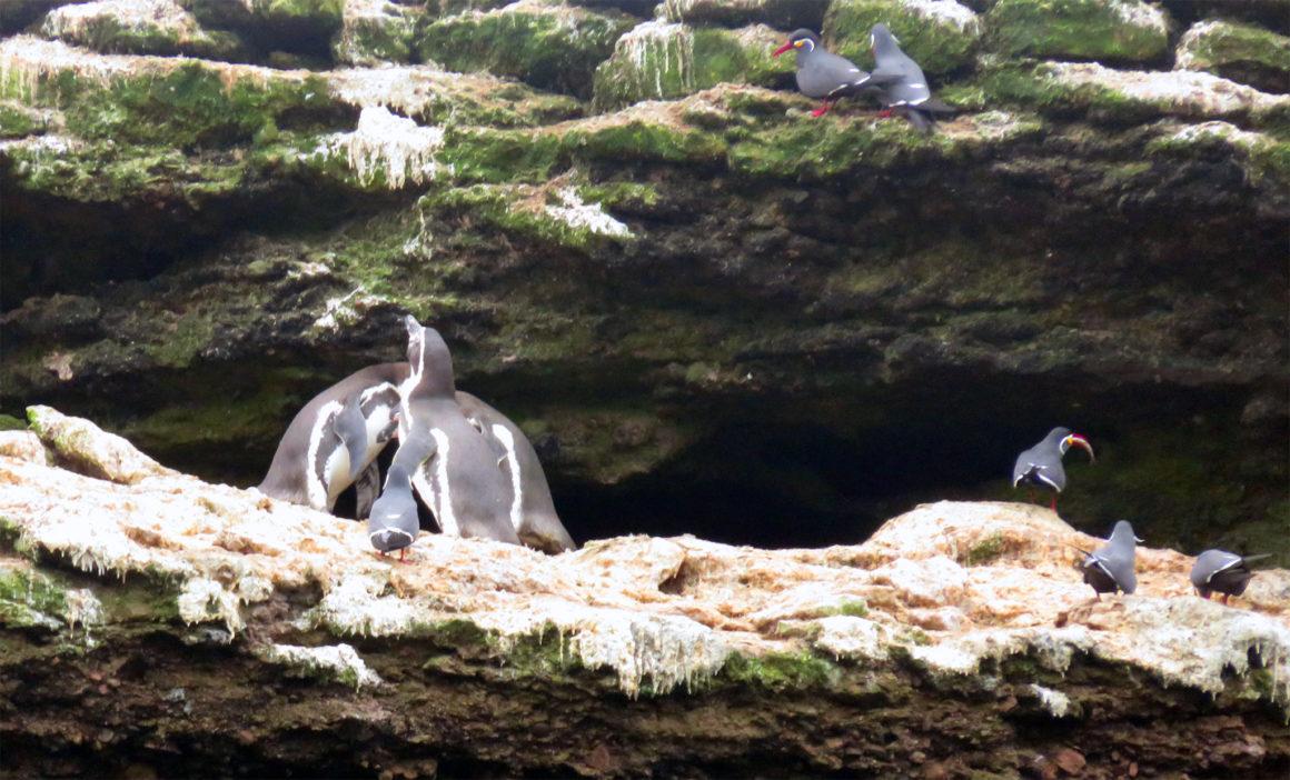 Qué ver en Paracas, Perú qué ver en paracas - IMG 0233 1160x702 - Qué ver en Paracas, Perú