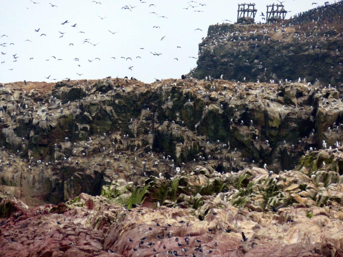 Qué ver en Paracas, Perú qué ver en paracas - IMG 0257 1160x870 - Qué ver en Paracas, Perú