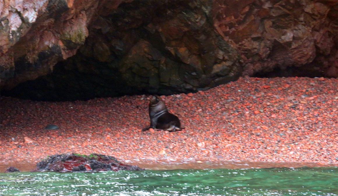 Qué ver en Paracas, Perú qué ver en paracas - IMG 0274 1160x675 - Qué ver en Paracas, Perú