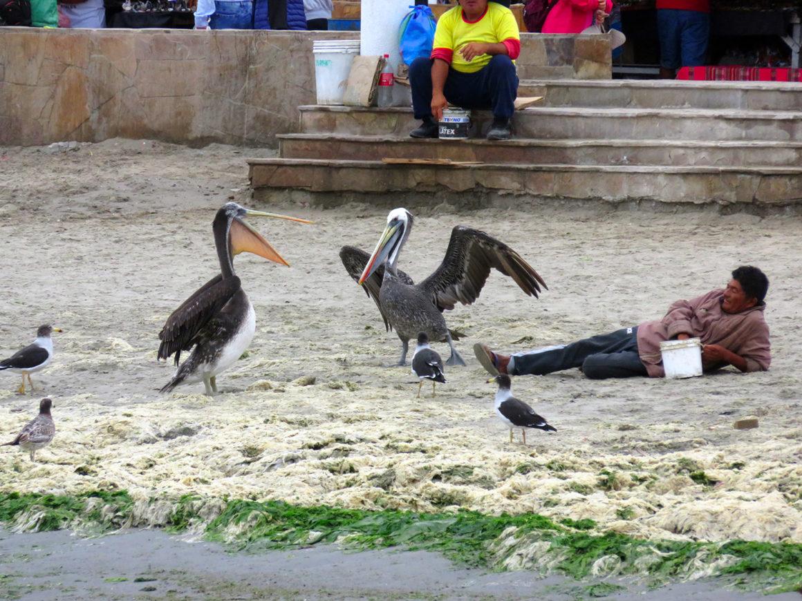 Qué ver en Paracas, Perú qué ver en paracas - IMG 0279 1160x870 - Qué ver en Paracas, Perú