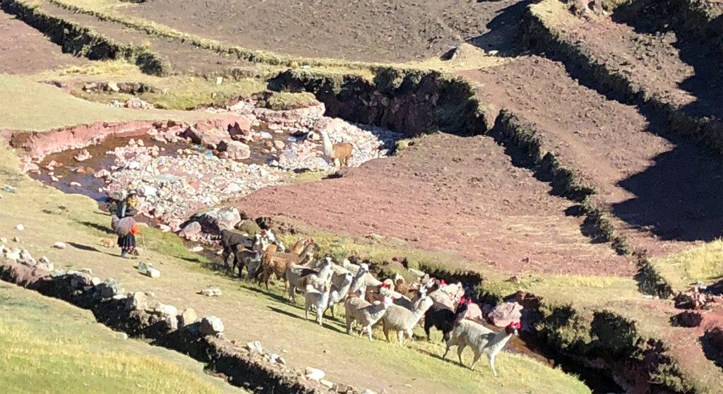 montaña arcoiris montaña arcoiris - montana colores palcoyo vinicunca peru cusco 10 1024x558 - Montaña Arcoiris de Perú, naturaleza multicolor