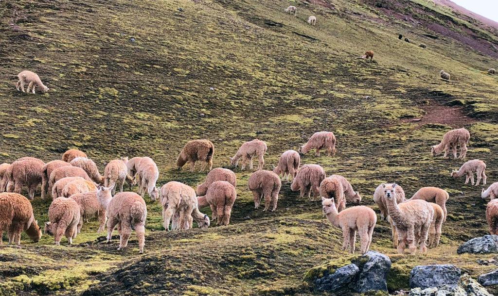 montaña arcoiris montaña arcoiris - montana colores palcoyo vinicunca peru cusco 17 1024x610 - Montaña Arcoiris de Perú, naturaleza multicolor