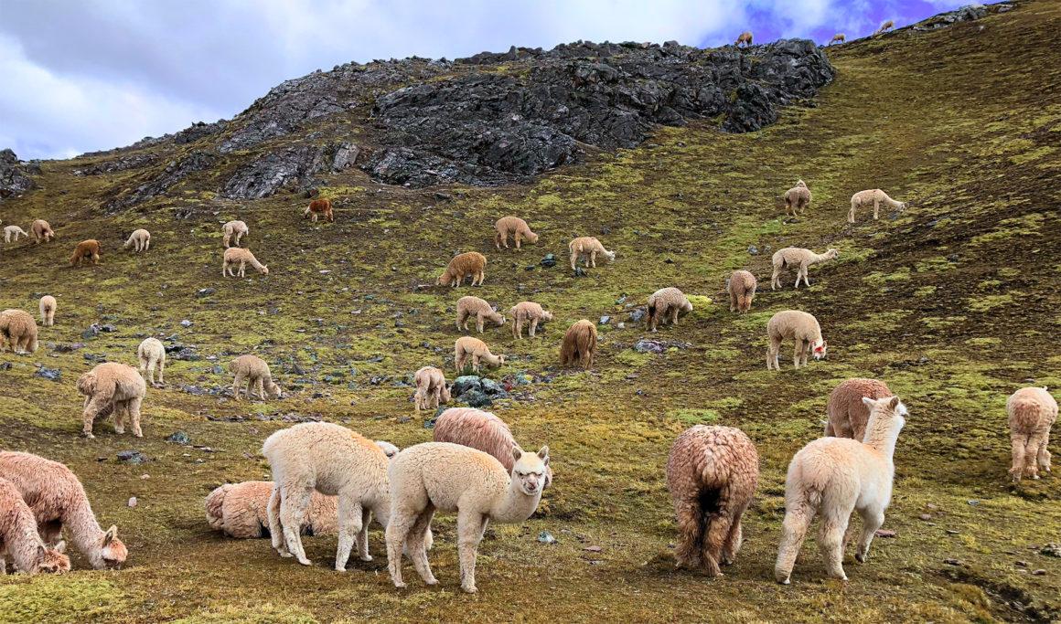 Ruta por Perú en dos semanas ruta por perú en dos semanas - montana colores palcoyo vinicunca peru cusco 18 1160x683 - Nuestra Ruta por Perú en dos semanas : Diario de Viaje a Perú