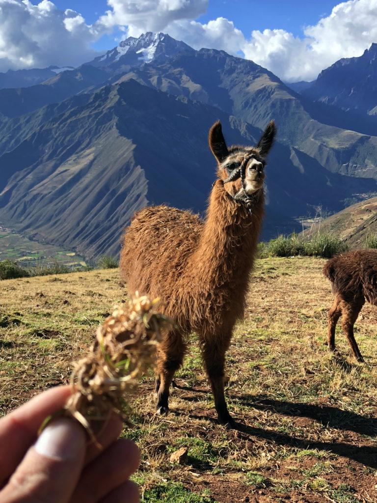 valle sagrado de los incas peru valle sagrado de los incas - valle sagrado de los incas peru 24 768x1024 - Valle Sagrado de los Incas en Perú