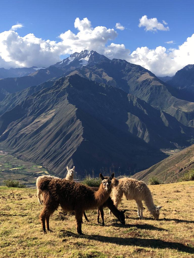 valle sagrado de los incas peru tres días en cuzco - valle sagrado de los incas peru 25 768x1024 - Tres días en Cuzco, Perú. Todo lo que necesita saber