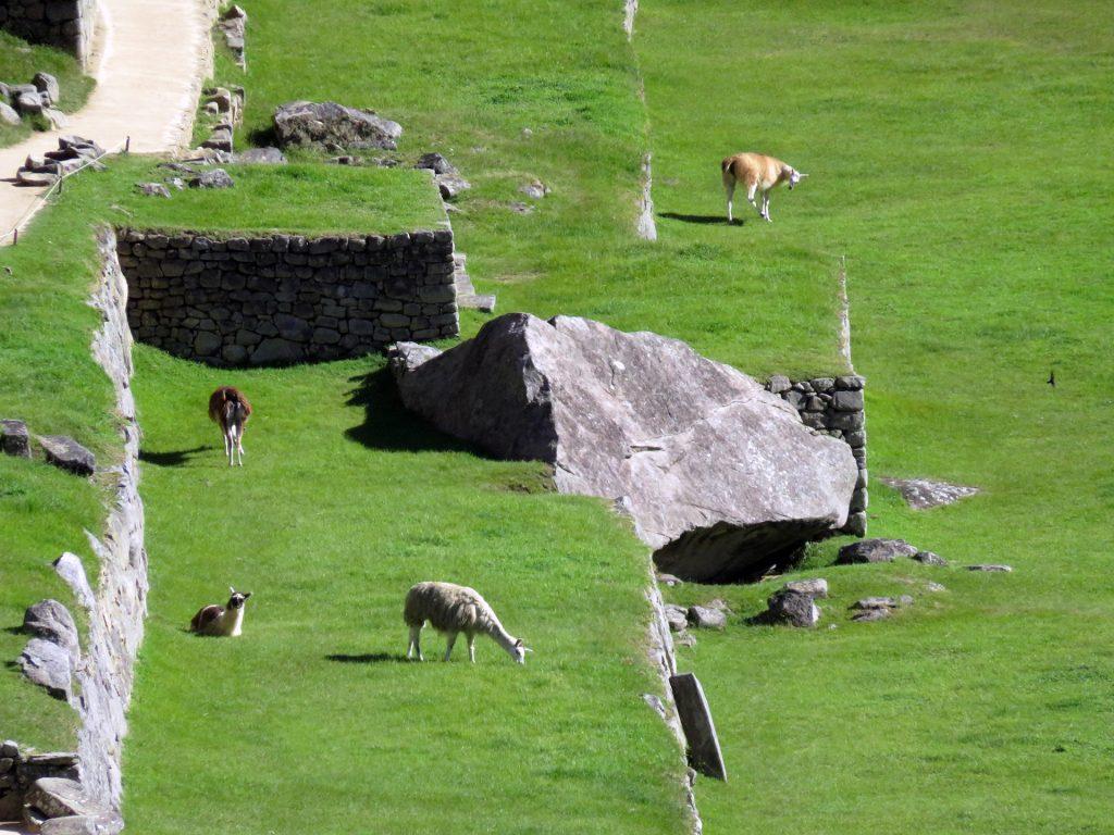 Machu Picchu Peru Aguas Calientes machu picchu - Machu Picchu Peru Aguas Calientes 24 1024x768 - Machu Picchu, un sueño cumplido