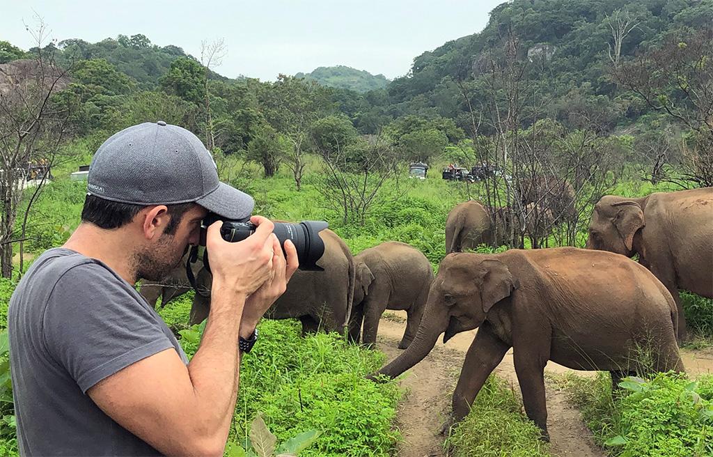 ver elefantes salvajes en sri lanka - thewotme minneriya elefantes salvajes sri lanka - Ver elefantes salvajes en Sri Lanka