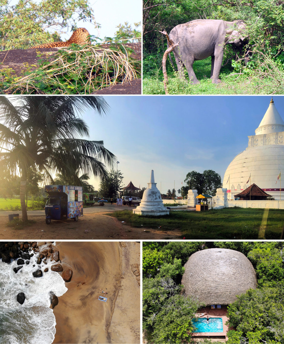 ruta por Sri Lanka en 8 días ruta por sri lanka en 8 días - thewotme chena huts yala national park leopard 1160x1406 - Nuestra ruta por Sri Lanka en 8 días, diario de viaje