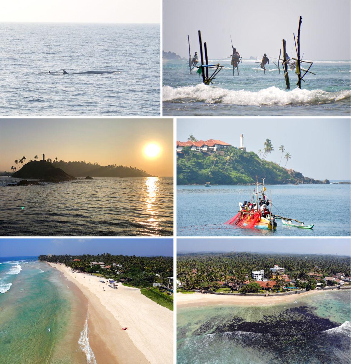 ruta por Sri Lanka en 8 días ruta por sri lanka en 8 días - thewotme unawatuna mirissa whales galle mosvold villa 1160x1201 - Nuestra ruta por Sri Lanka en 8 días, diario de viaje